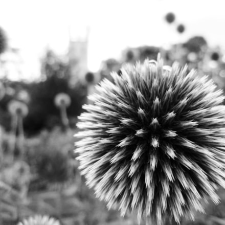 Spiky, Panasonic DMC-FX180