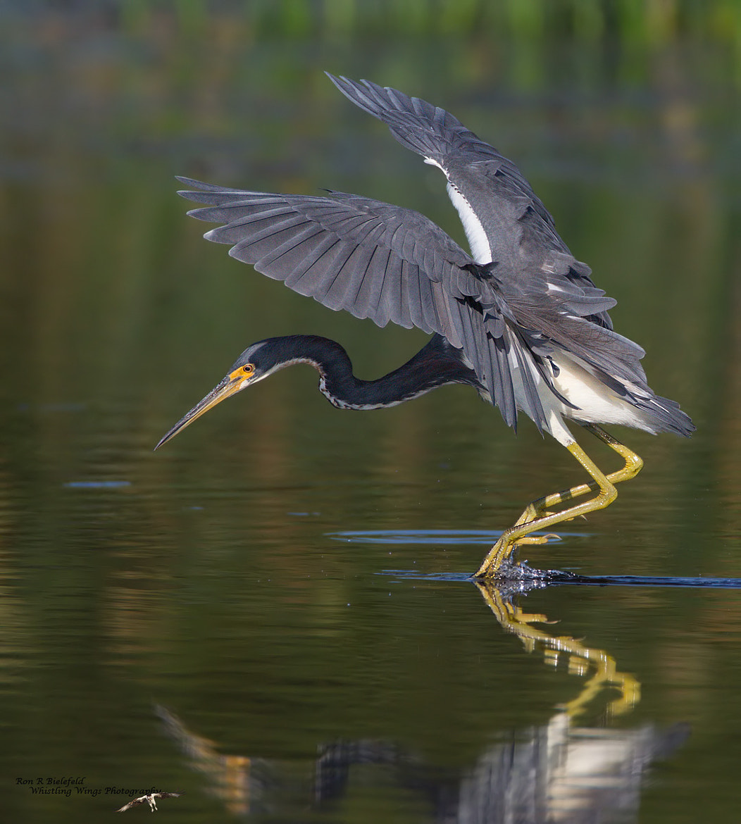 Photograph Tri-colored fishing by Ron Bielefeld on 500px