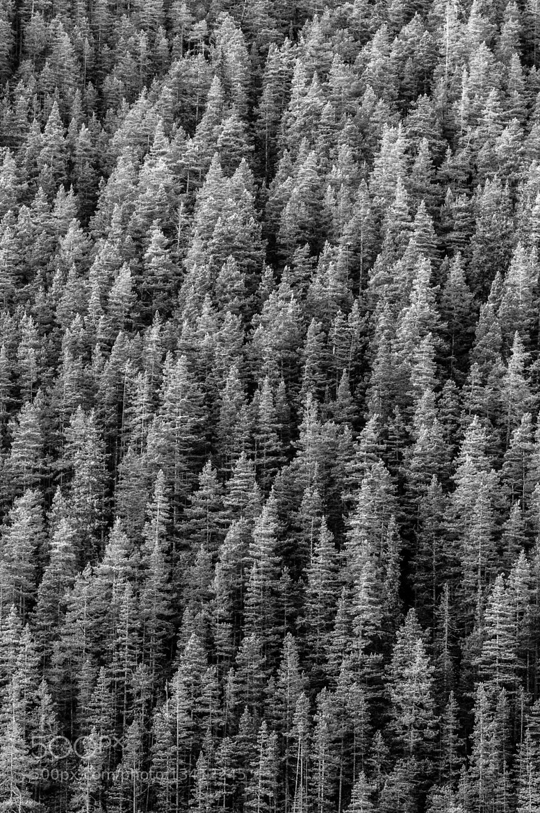 Photograph Trees by Tor Ivan Boine on 500px