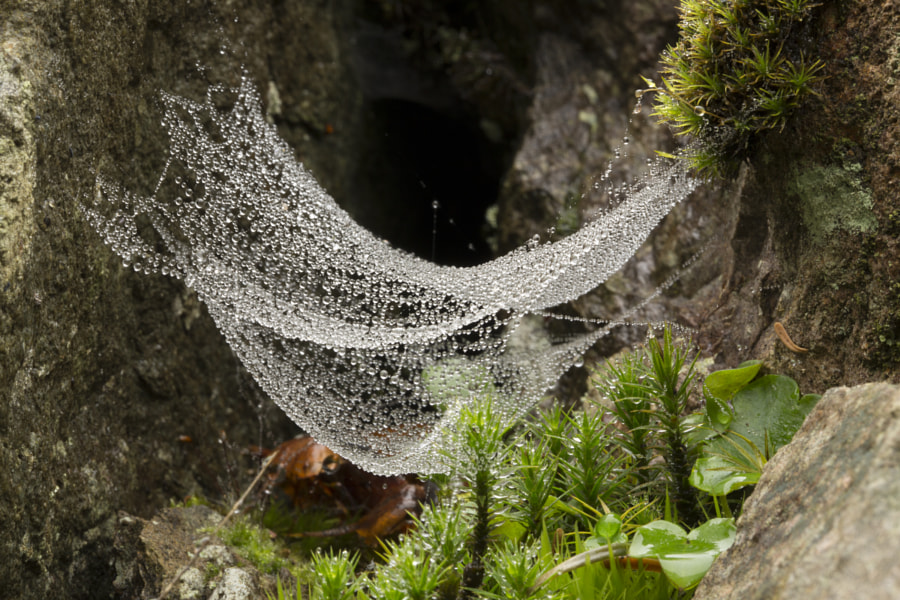 Cobwebs and dew