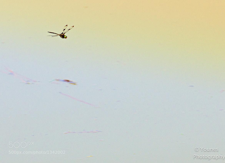 Photograph lake patrol by younes sediki on 500px