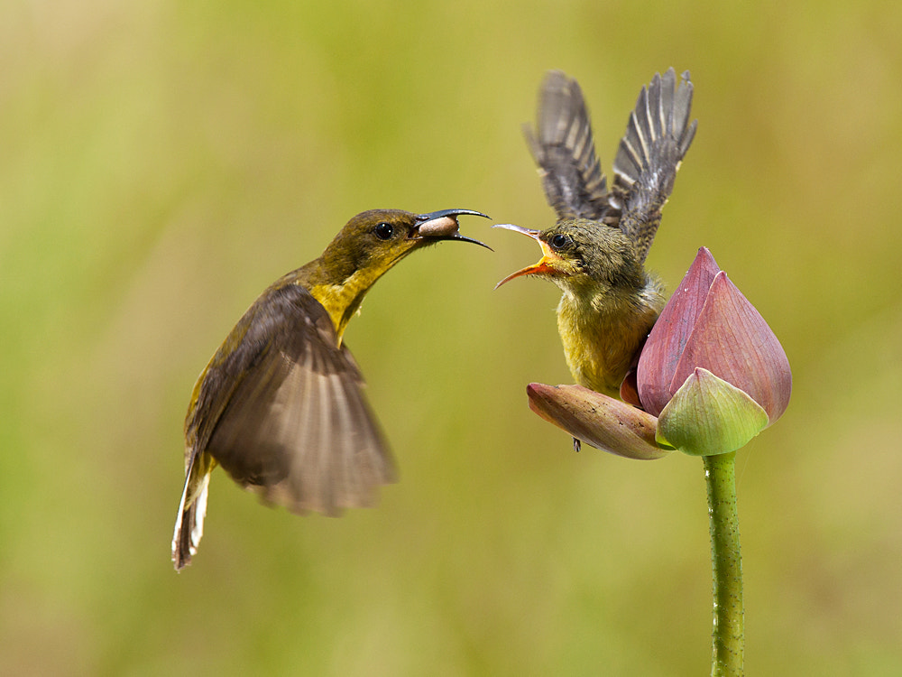 Photograph I Give Up by Iwan Tirtha on 500px