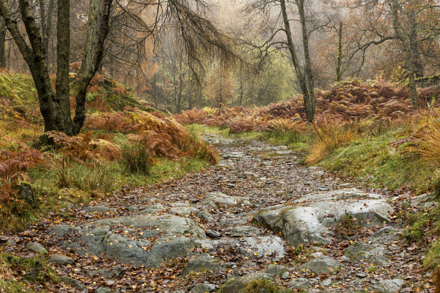 Path to Holme Fell