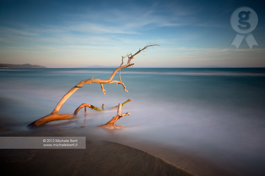 Photograph Shrub on the beach (June 2012)  by michele berti on 500px