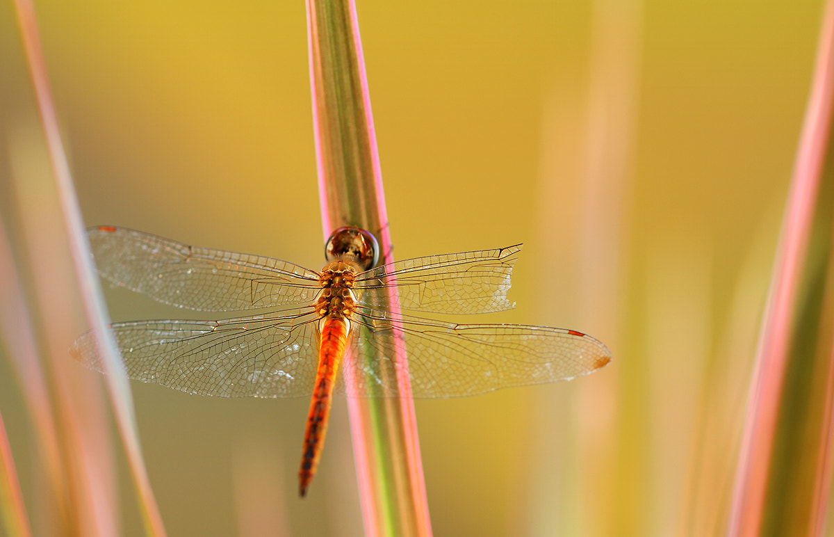 Photograph Broken Wing by Michael Savellano on 500px