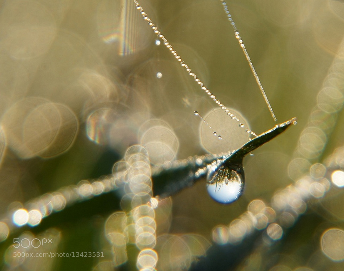 Photograph A Moment of Clarity by Misty Dawn Seidel on 500px