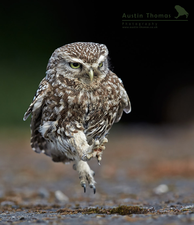 Jump into the New Year with a spring in your step by Austin Thomas on 500px.com
