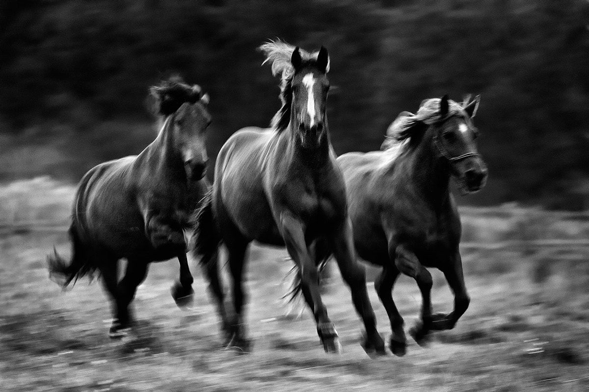 Photograph In movimento by Peter Majkut on 500px