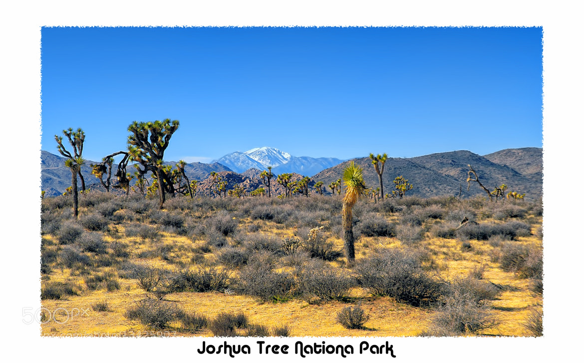 Photograph Joshua Tree by Greg McLemore on 500px
