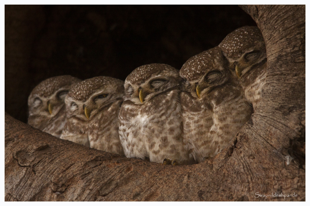 Photograph owl famiily by wanderlust  on 500px