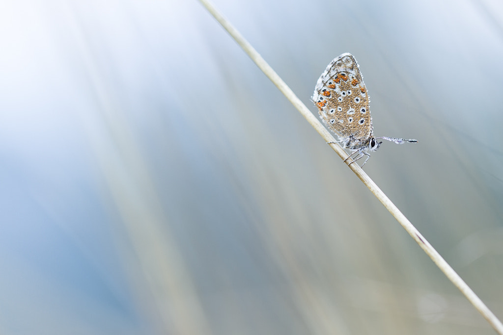 Photograph Blue by PERRIN Gregory on 500px