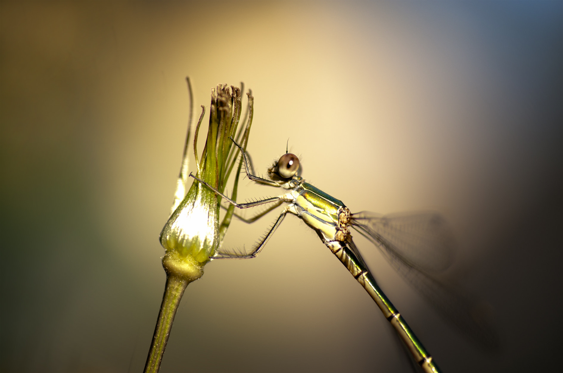 Photograph Dragonfly by Tamara Bruggink on 500px