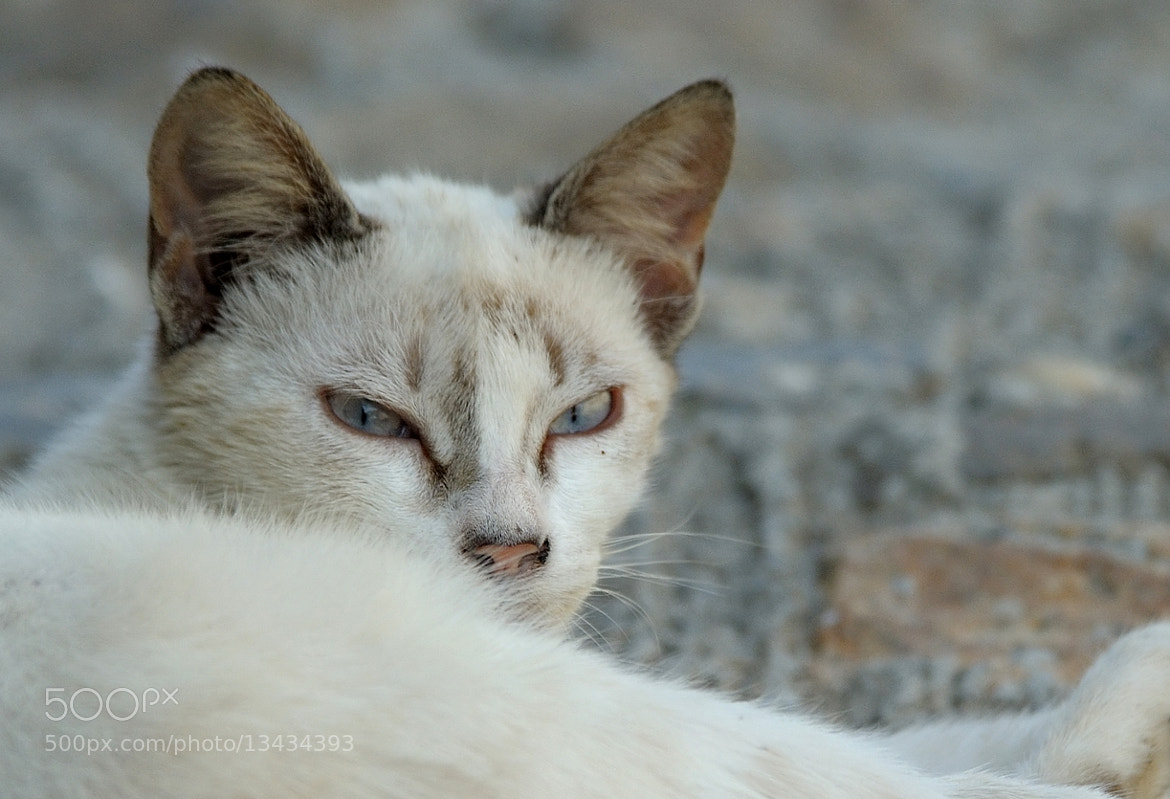 Photograph Gato callejero by Jose Joaquín Pérez Gamero on 500px