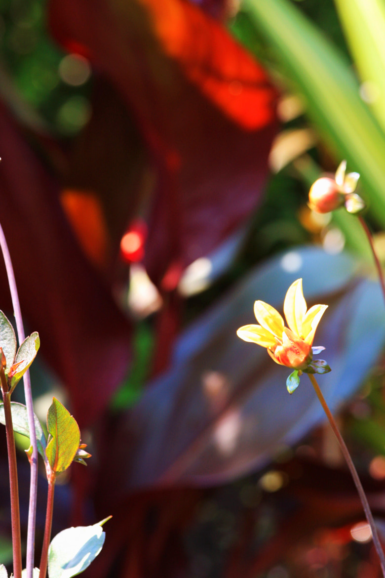 Photograph Backpetal by burc blackwell on 500px