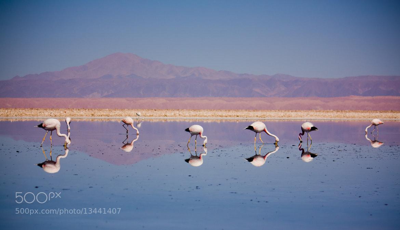 Photograph Natural mirror by Andrés Rodríguez on 500px