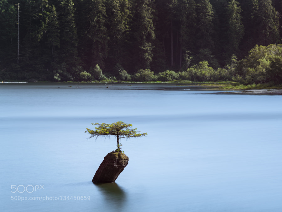 Bonsai Tree in Fairy Lake