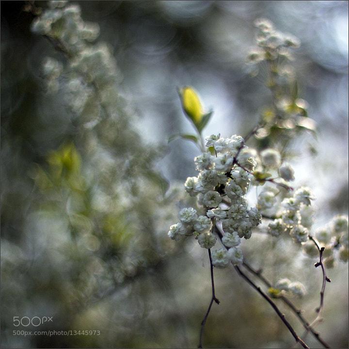 Photograph ... by Dorota Miklaszewska on 500px
