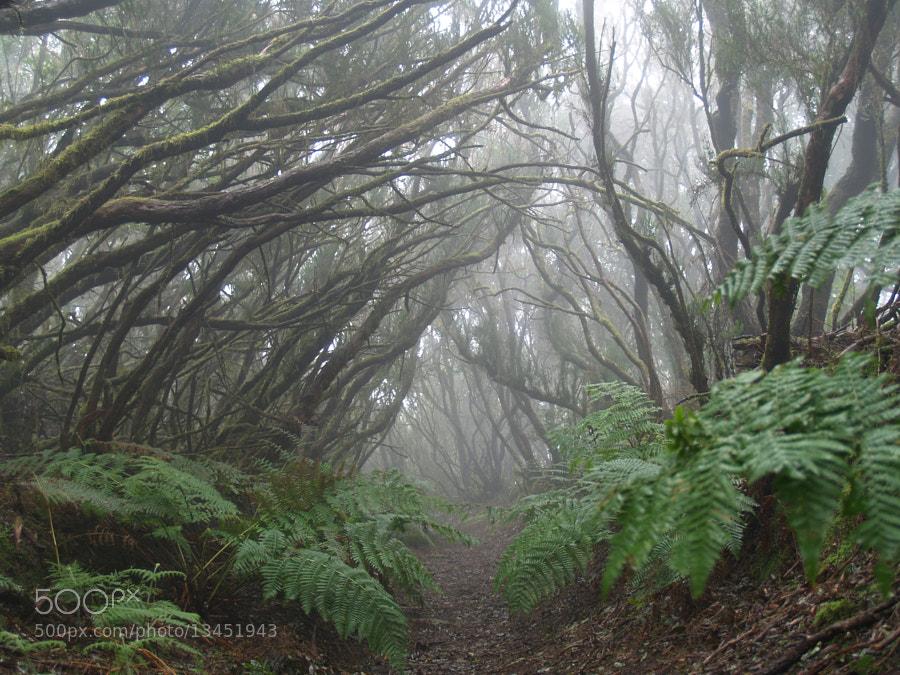 Monteverde en Anaga by Miguel A. Noriega (manoriegaa) on 500px.com