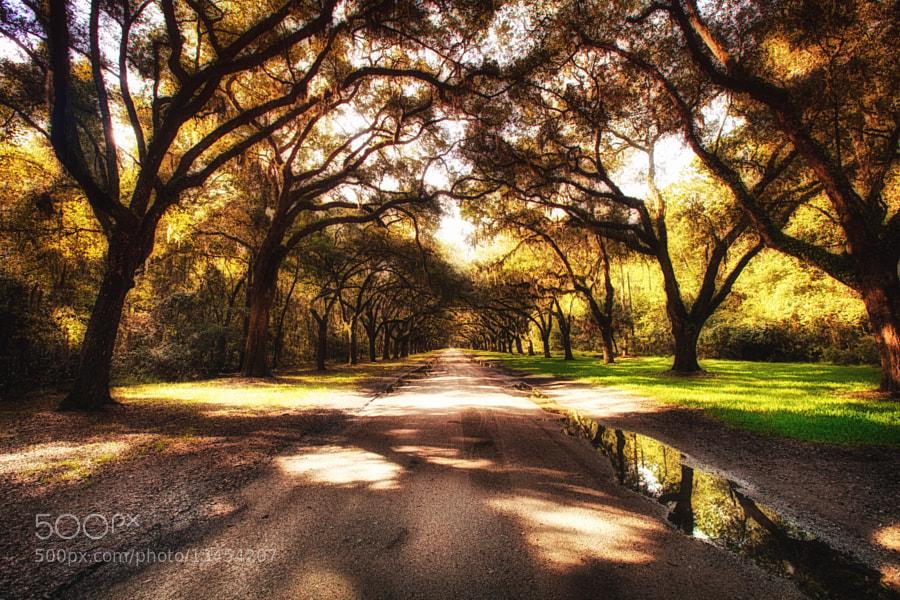 Wormsloe plantation Savannah