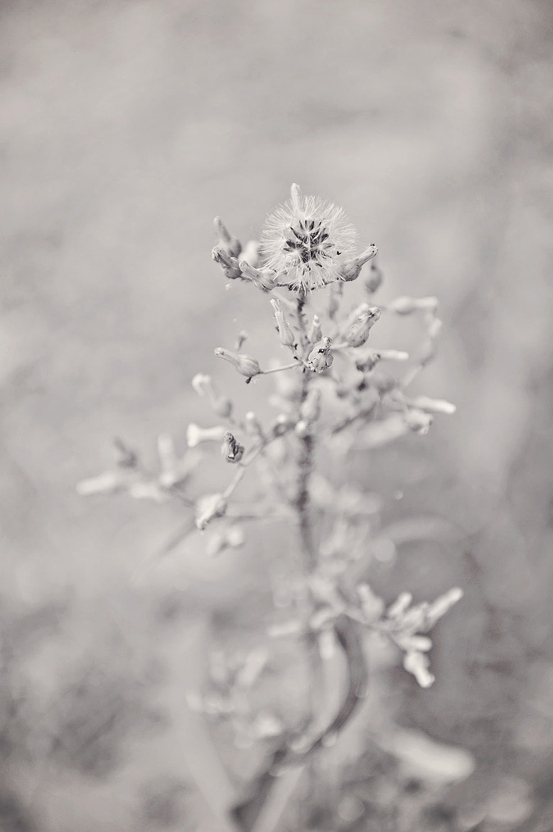 Photograph b/w weed by Kelley Nelson on 500px