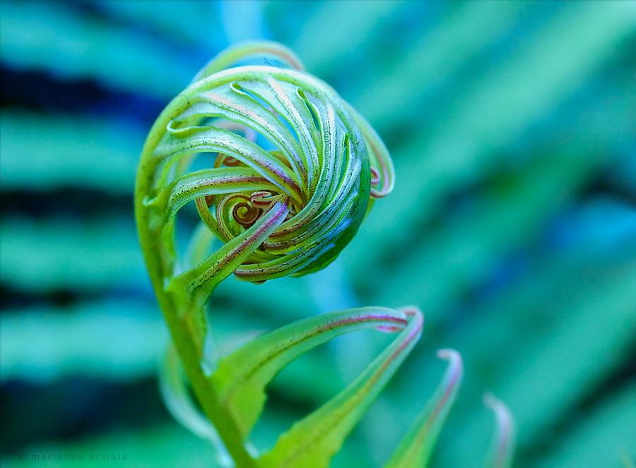 furled fern