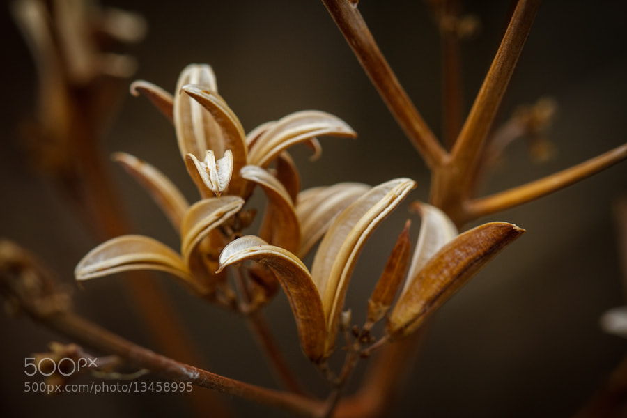 Photograph .: Seed Pods :. by Jon Rista on 500px