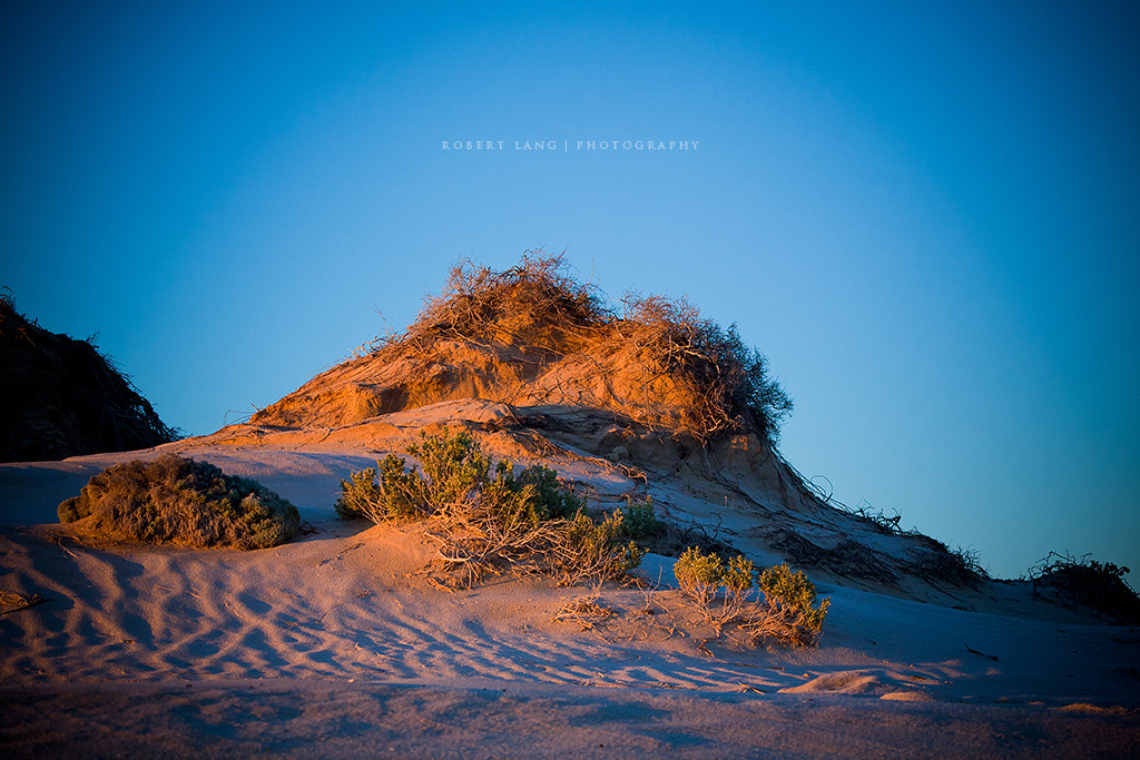 Photograph Coastal Dune by Robert Lang on 500px