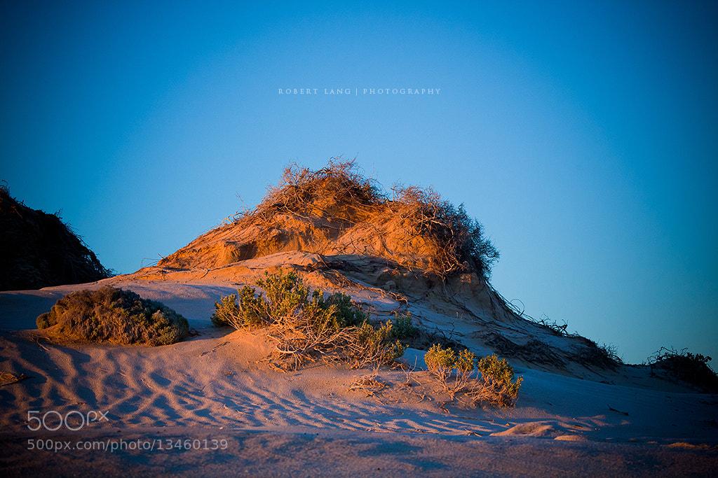 Photograph Coastal Dune by Robert Lang on 500px