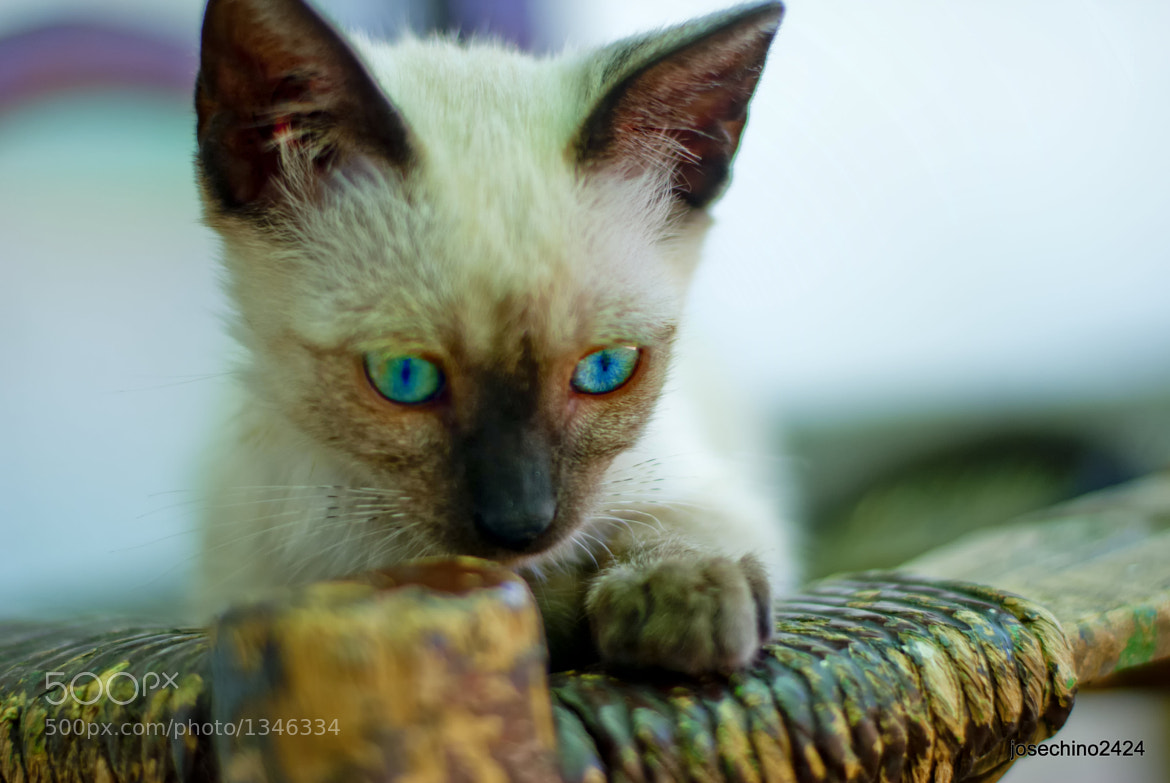 Photograph Kitty by Jose Maria Ramos Montero on 500px