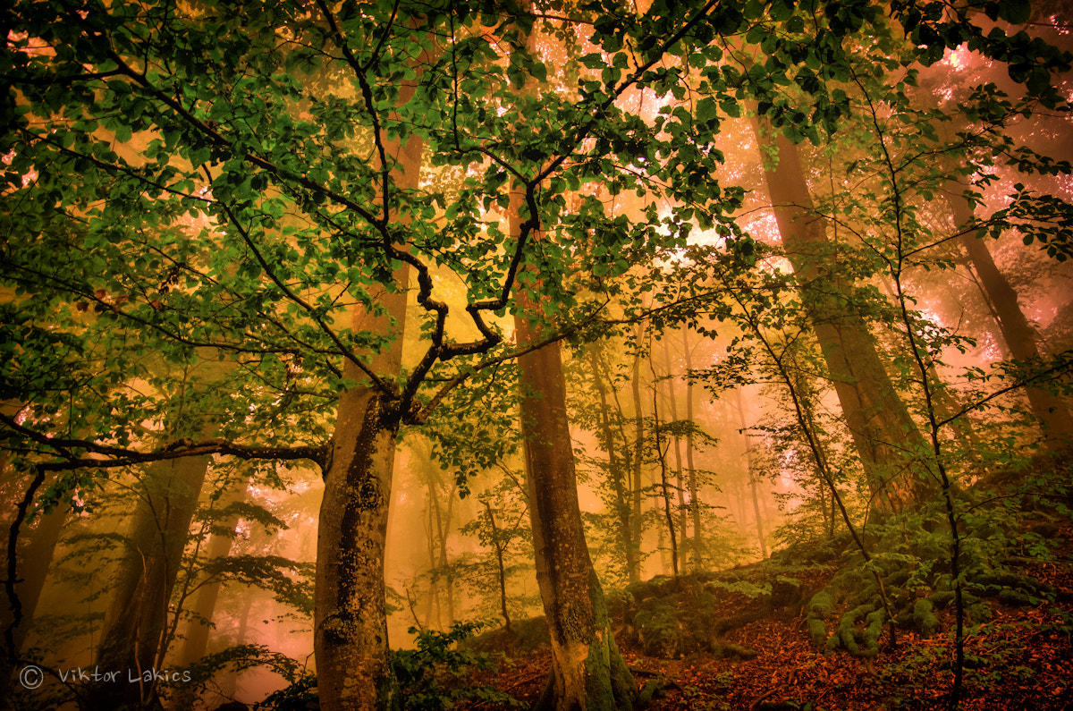 Photograph The Veins of the Forest by PhotonPhotography -Viktor Lakics on 500px
