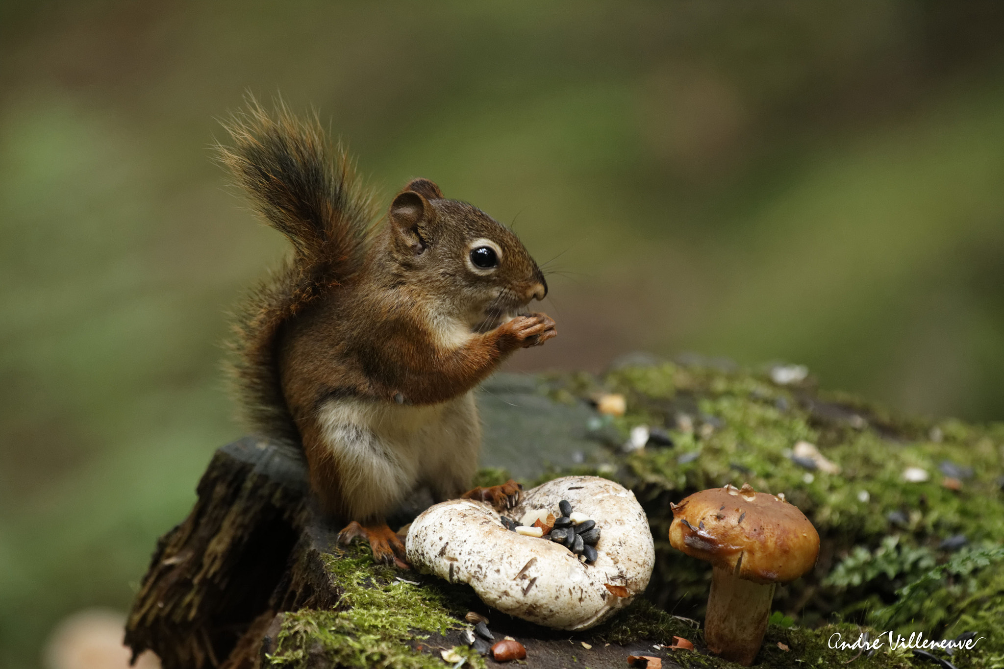Photograph Live in the green by Andre Villeneuve on 500px