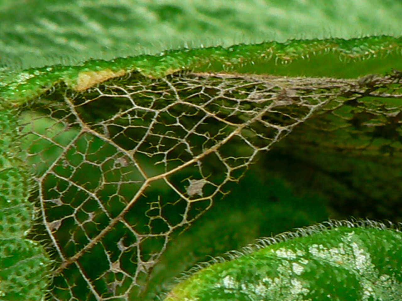 Photograph Green lace by Soňa Riegerová on 500px