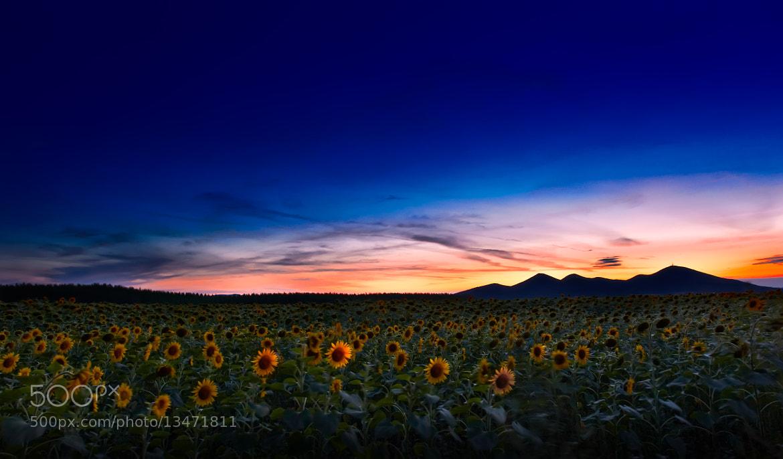 Photograph Summer Memories by Bernadett Pusztai on 500px