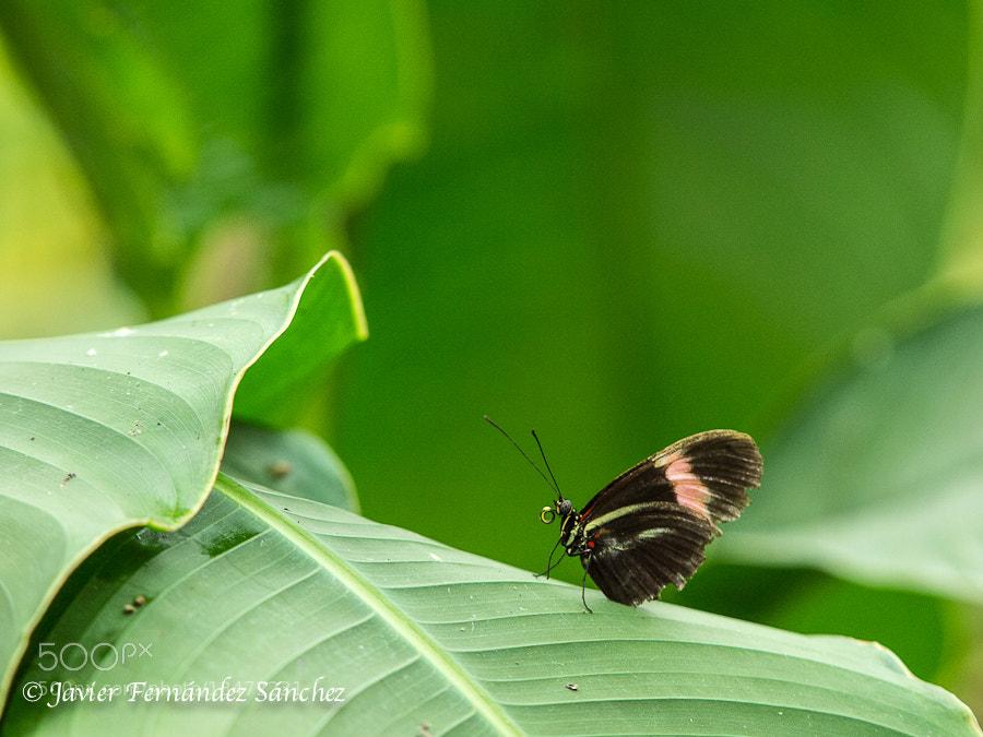 Photograph Butterfly by Javier Fernández Sánchez on 500px