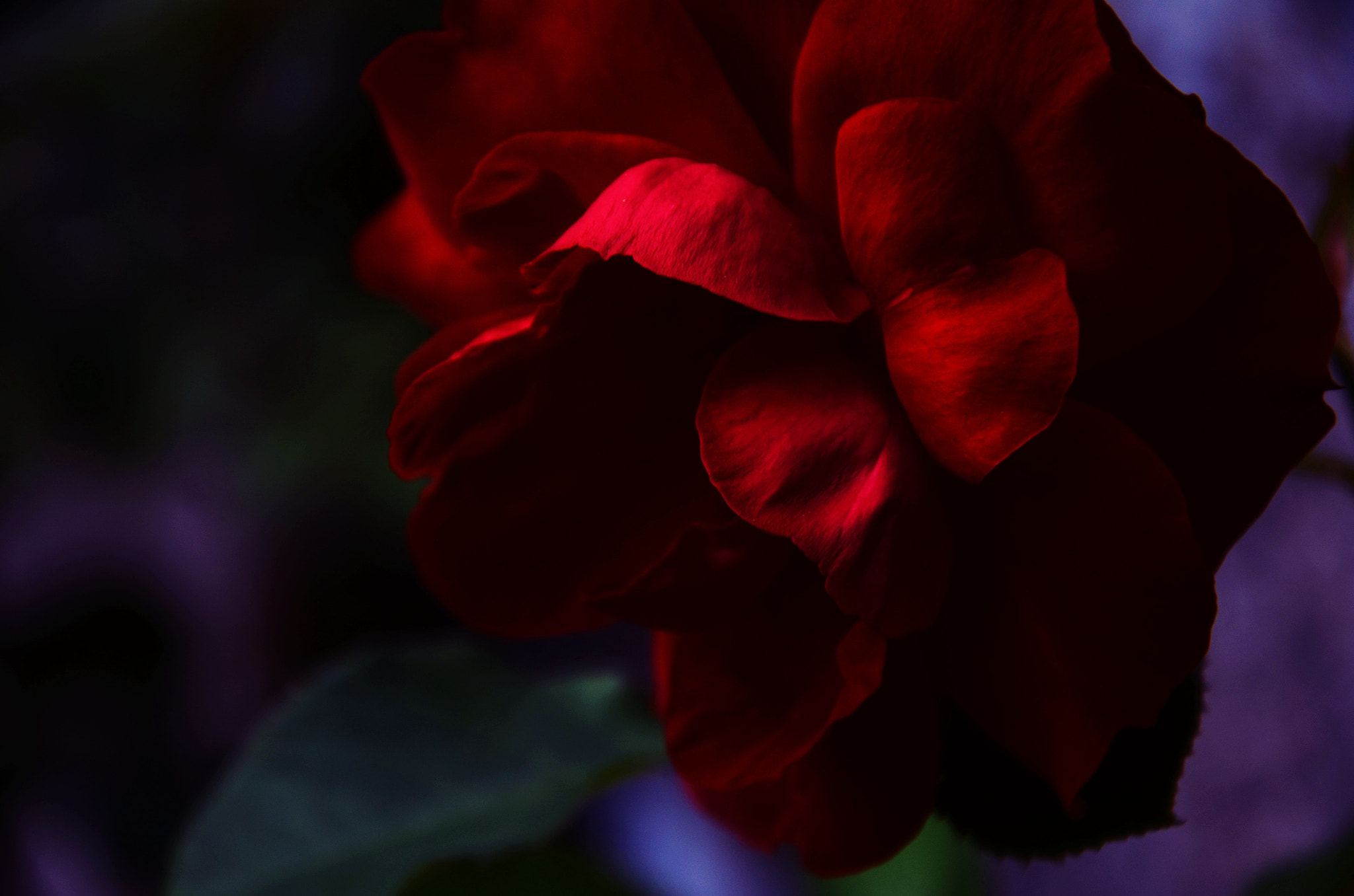 Photograph red as blood by Julia Kaufmann on 500px