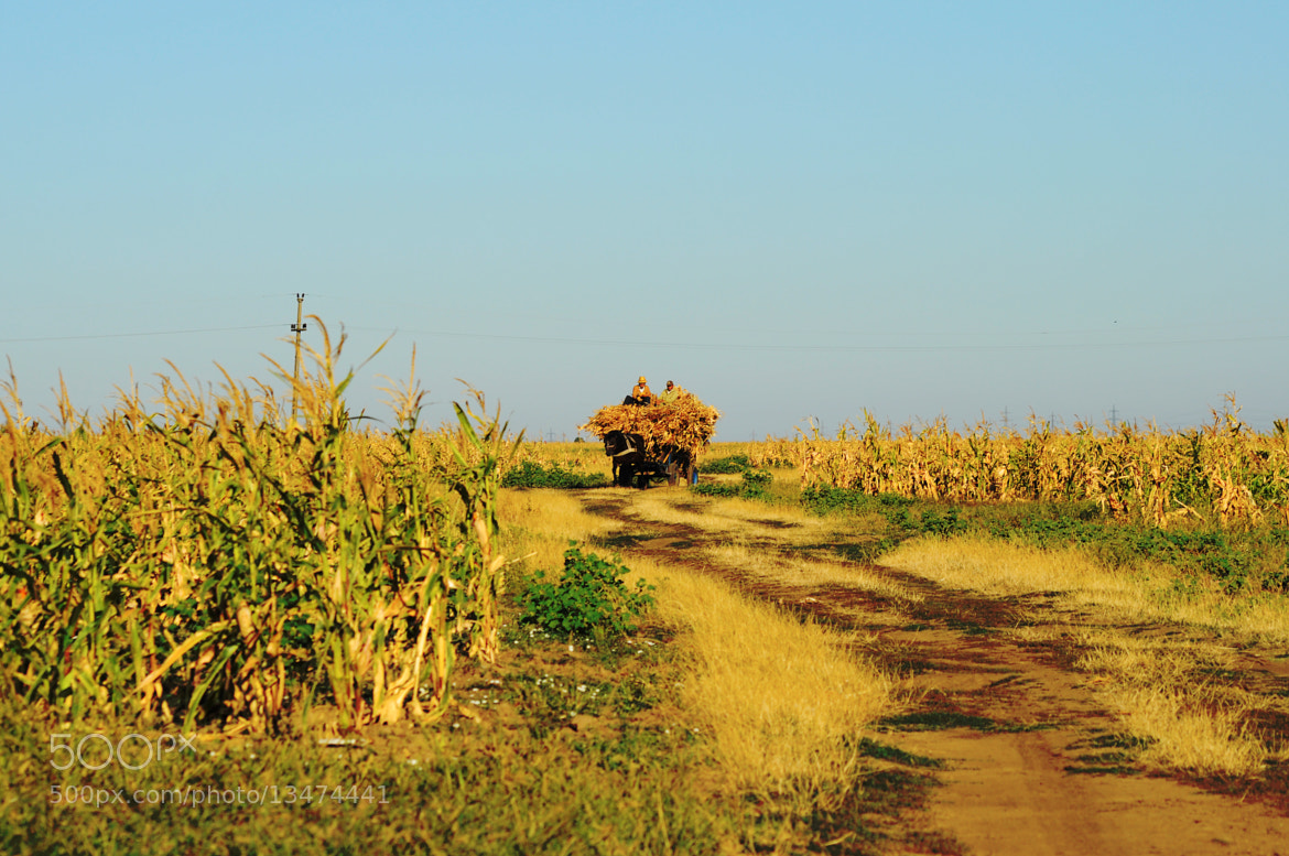 Photograph bringing harvest by alina stancioiu on 500px