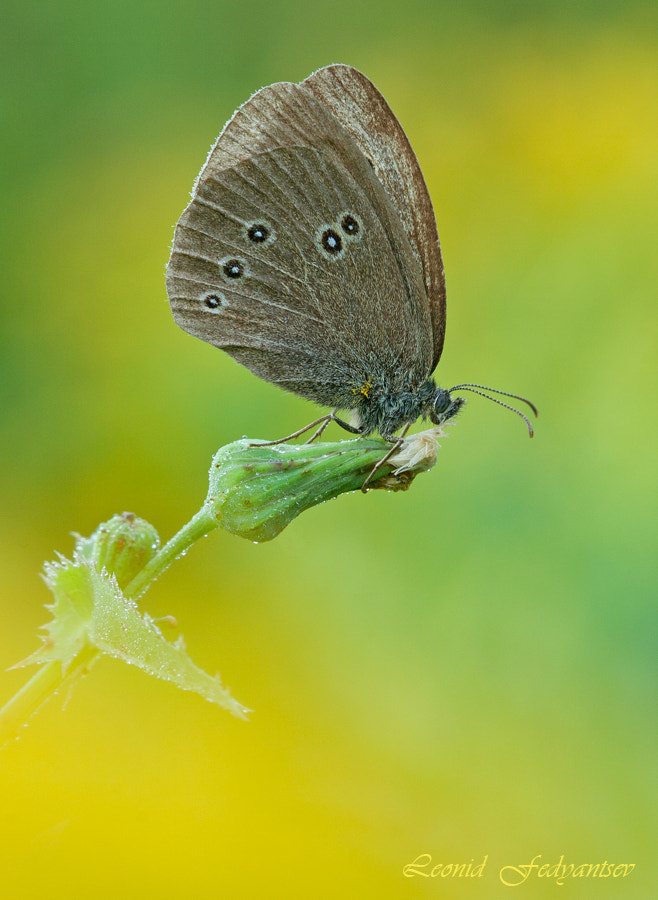 Photograph The Ringlet (2) by Leonid Fedyantsev on 500px