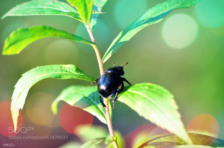 Photograph Beetle II by Viktor Korostynski on 500px