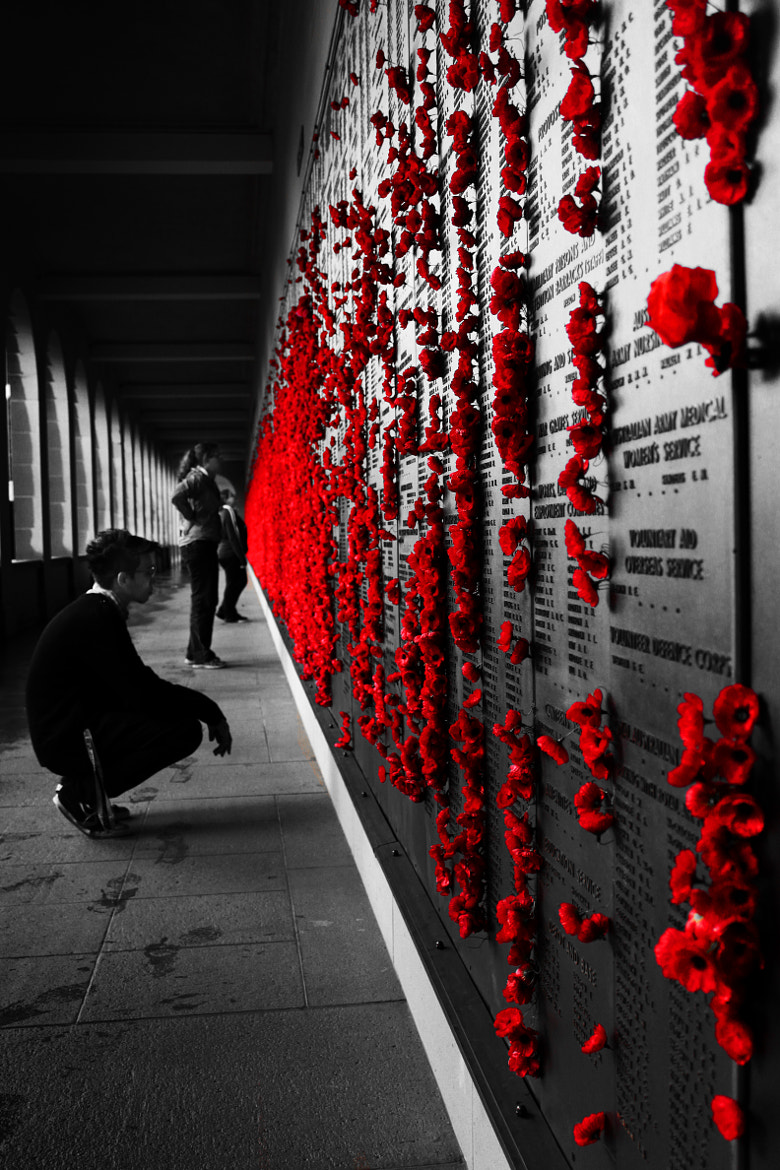 Photograph The wall of poppies.  by Alistair Martin on 500px