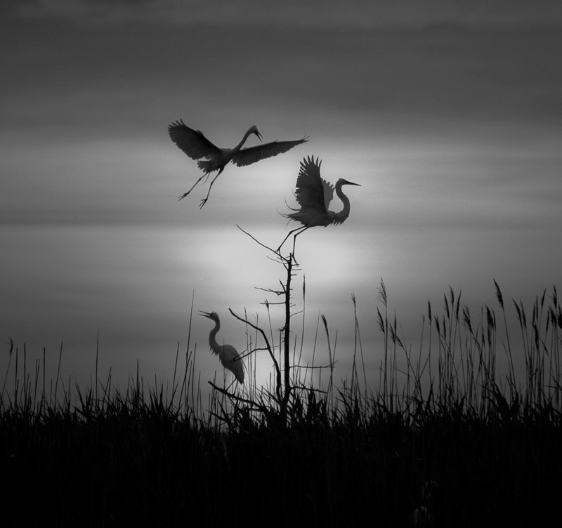 Photograph Greats in B&W by Pamela Aquilani on 500px