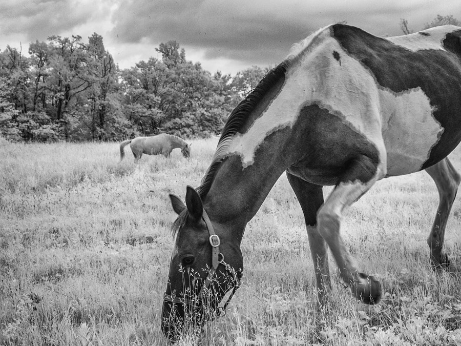 Horses grazing on a summer day by John Poltrack on 500px.com
