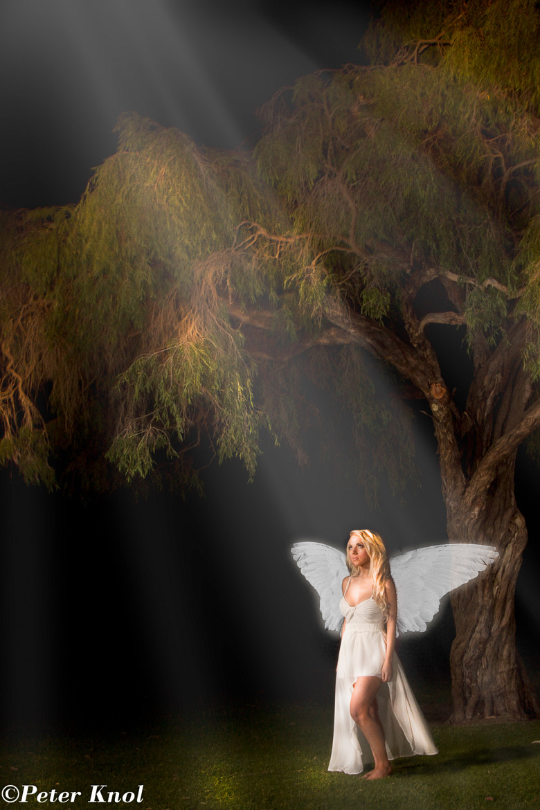Photograph Angel at tree by Night by Peter Knol on 500px