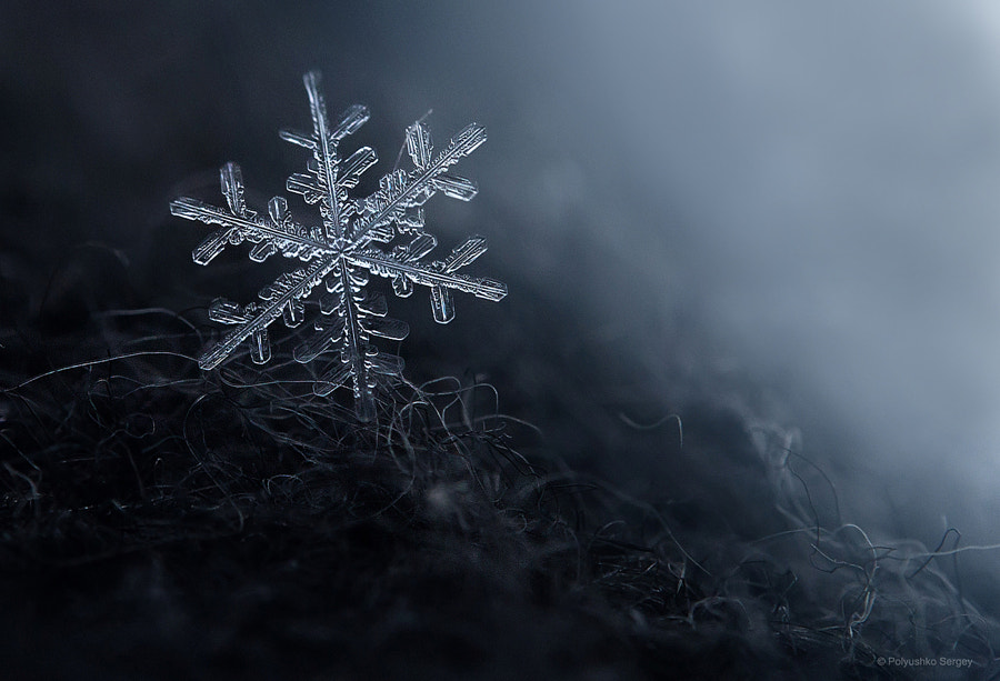 Winter macroworld by Sergey Polyushko on 500px.com