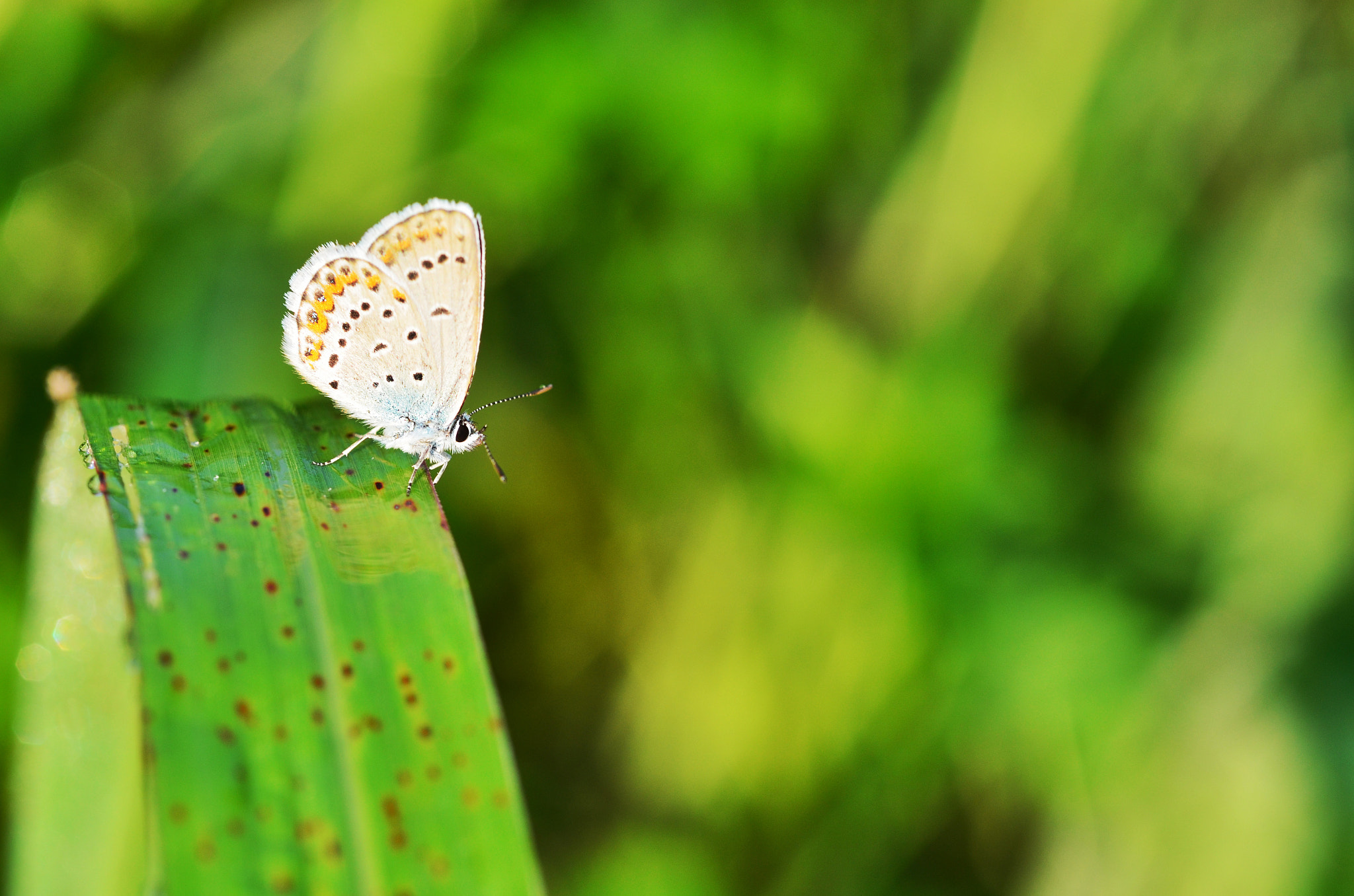 Photograph Butterfly by Silvia Peschiera on 500px