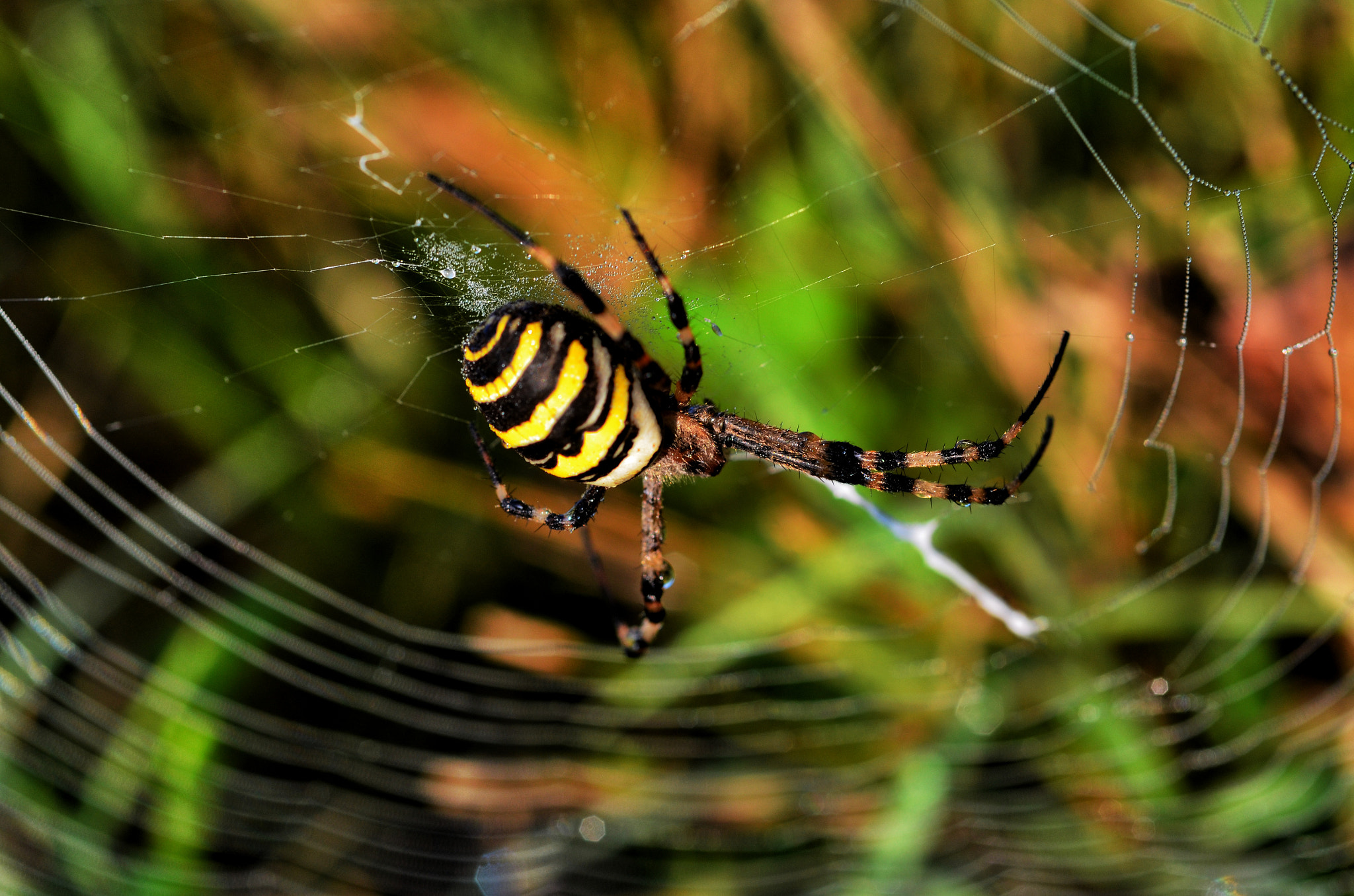Photograph Huge spider by Silvia Peschiera on 500px