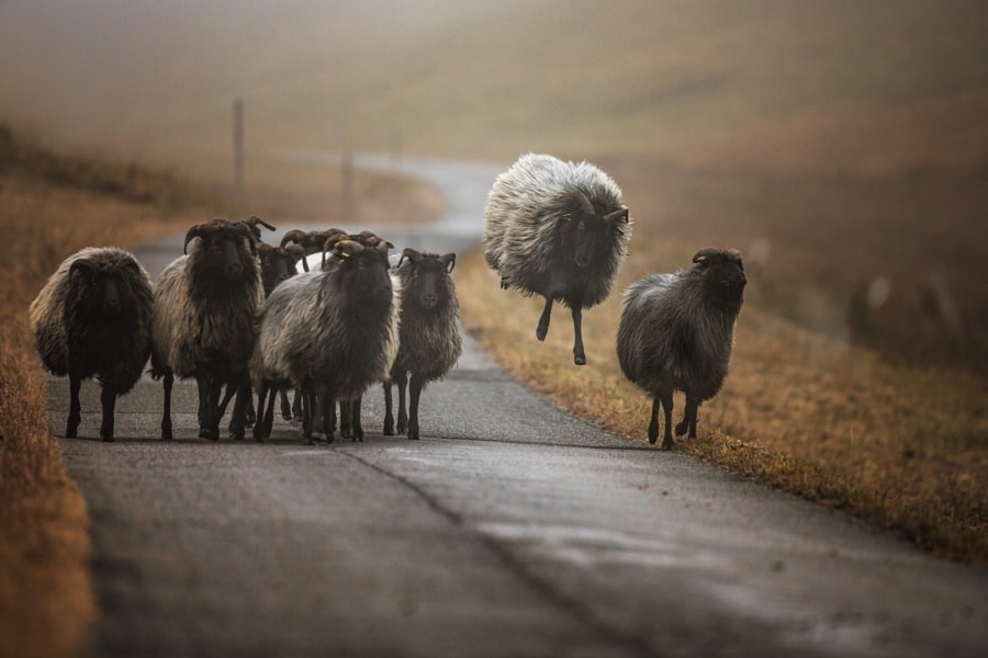 to step out of line by Manfred Karisch on 500px.com