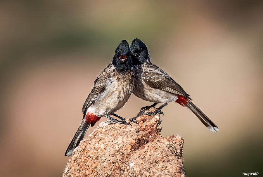 How do we look by Nagaraj Chindanur on 500px.com