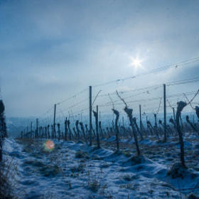 Photograph firstSnow by Lukas Bachschwell
