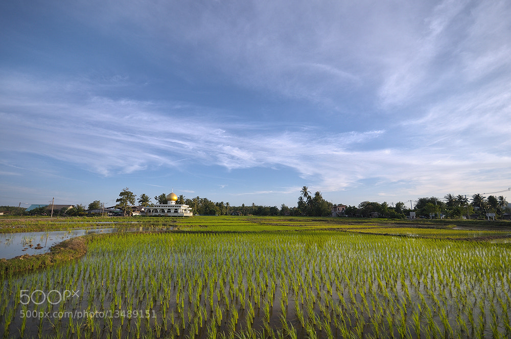Photograph Great Fields Rice and Best place for Faithful. by Supachai Salaeman on 500px