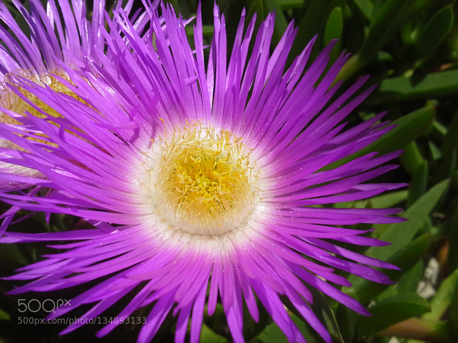 Typical flower in southern